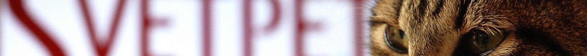 logo svetpet